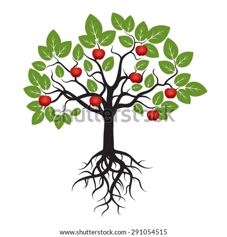 Royalty Free Color Apple Tree And Roots Vector 291178412 Stock