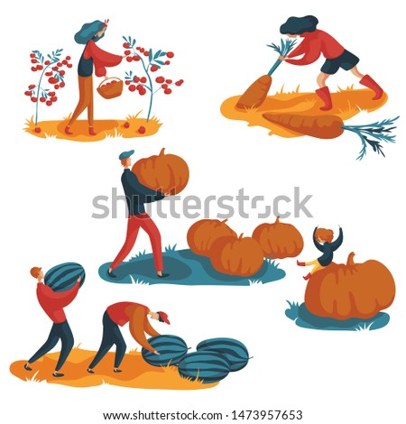 young woman collects tomatoes, a woman collects carrots, dad and daughter collect pumpkins, two friends collect watermelons. Autumn harvesting