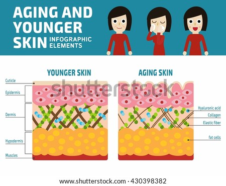 Younger and aging skin Infographic elements. Elastin and collagen flat vector illustration.