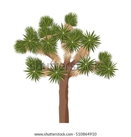yucca brevifolia vector joshua