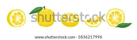 Yuzu japanese citron fruit vector illustration isolated on white background. Full citrus yuzu fresh fruit with green leaves.