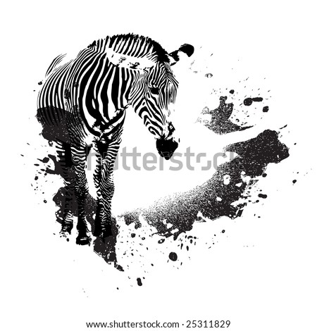 Zebra in black and white with splatted paint accents