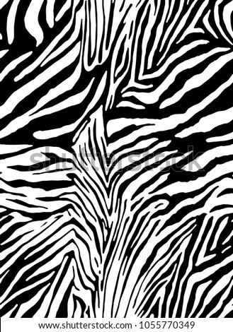 zebra print  animal skin  tiger