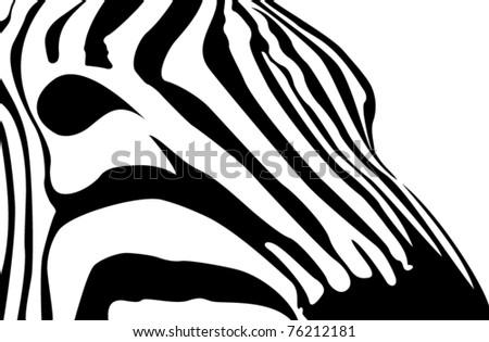 zebra profile vector