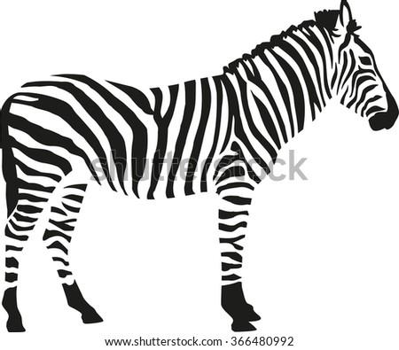 zebra silhouette isloated on