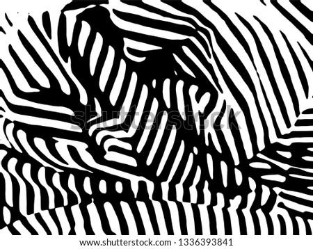 Horse And Zebra On White Background