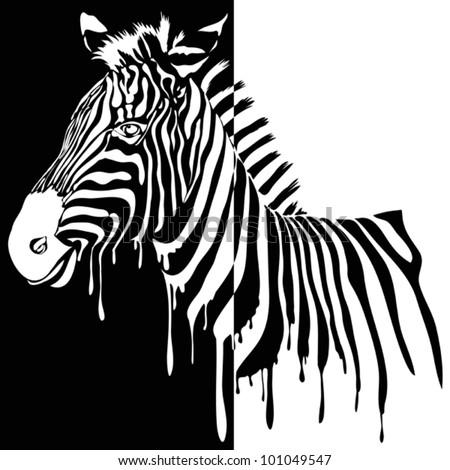 Zebra vector black and white - stock vector
