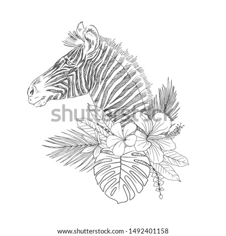 Zebra with tropical flowers hand drawn sketch. Striped African animal in palm, monstera leaves vector illustration. Blooming Hibiscus, Frangipani, Strelitzia. Exotic flora, fauna coloring book