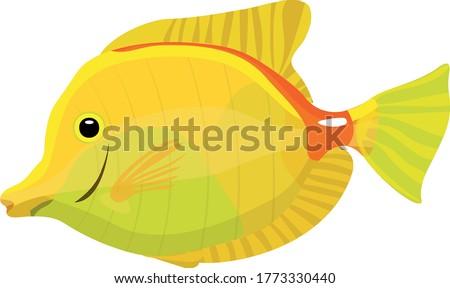 zebrasoma small fish on a white