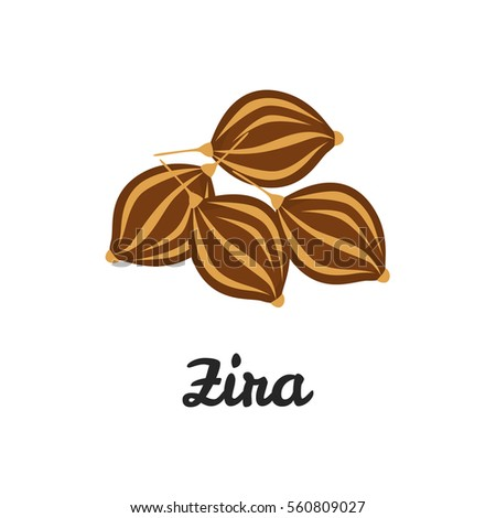 Zira seeds color flat icon for web and mobile design