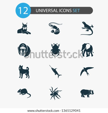 zoo icons set with lynx  spider
