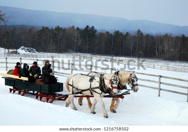 Stockbridge, MA, USA December 8 A horse drawn sleigh tours the country side during a snow fall in Stockbridge, Massachusetts