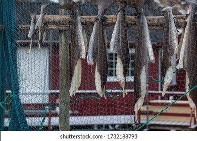 Stockfish (cod), process of stockfish cod drying during winter time on Lofoten Islands, Norway, norwegian traditional way of drying fish in cold winter air on wooden drying rack