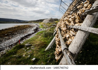 Stockfish up for drying in Lofoten Islands - Norway