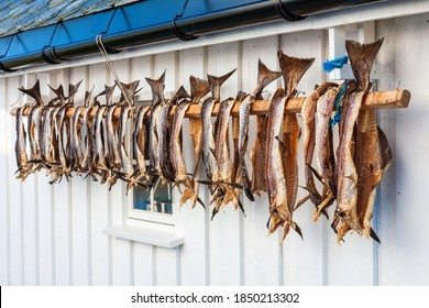 Stockfish drying on a wall