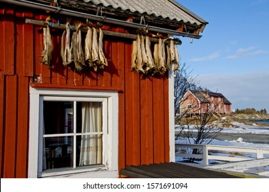 Stockfish on a house at Henningsvaer, Lofoten, Nordland County, Norway