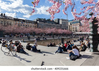 Stockholm, Sweden - Apr 21, 2016 : Cherry blossoms at the Kungstradgarden park. 63 cherry trees were planted in 1998. Stockholm celebrates cherry blossoms day every year, which was Apr 16 in 2016.
