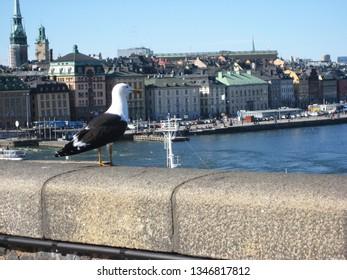 Stockholm, Sweden April 14, 2010. A seagull watching over Stockholm.