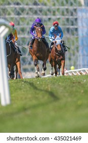 STOCKHOLM, SWEDEN - JUNE 6, 2016: Race horses and jockeys in the second lap at the Nationaldags Galoppen at Gardet.
