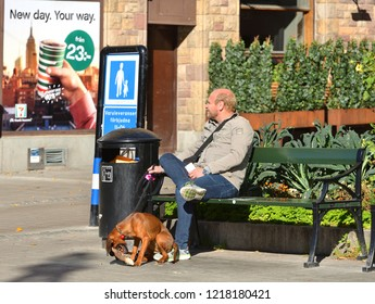 STOCKHOLM, SWEDEN - SEPT 25, 2018: Man on bench with cute puppy gnawing stick