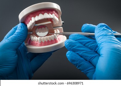 Stomatology appointment, dentistry instruments and dental hygienist checkup concept with dentist wearing latex gloves, teeth model dentures, mouth mirror. Regular checkups are essential to oral health