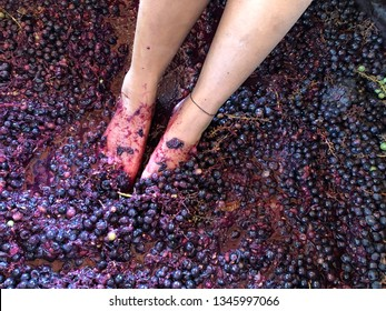 Stomping grapes with feet