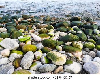 stone and algae