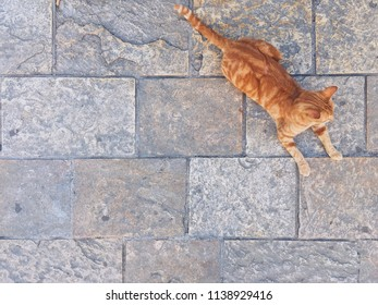 Stone background with a cat