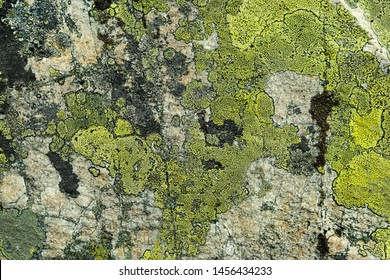 stone background with rough textured surface and Lichen Moss. Lichen rhizocarpon on stones south Ural Mountains.