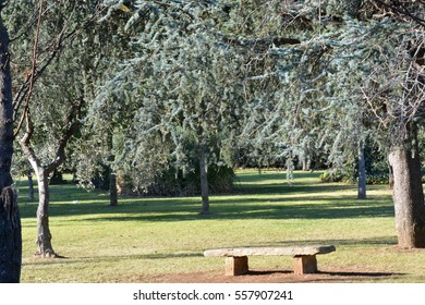 Stone bench in a park