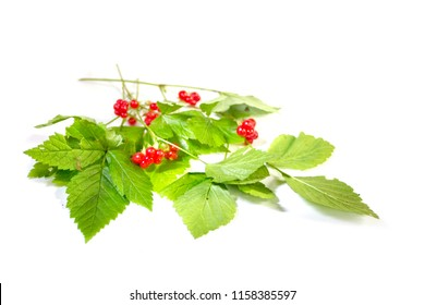 Stone bramble with berries branches on white