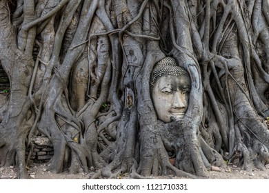 The stone Buddha head entwined in tree roots at Wat Mahathat, Ay
