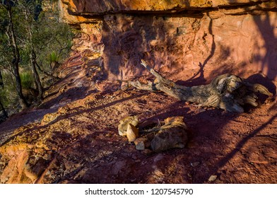 Stone campfire setup by a walking path under a rock ledge in the mountains. Rugged hiking trail on a cliff face flanked by trees in the Blue Mountains National Park in Australia.