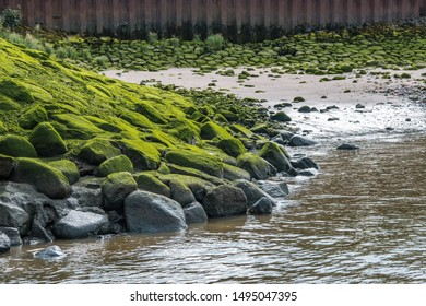 Stone covered with green moss on a riverbank