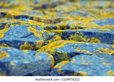Stone dike on Schiermonnikoog, the Netherlands