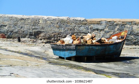 Stone for fishes. A broken old boat filled with stones so that the wind of the Western Cape don't blow it around.