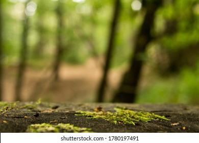 stone floor in a green forest, for product placement
