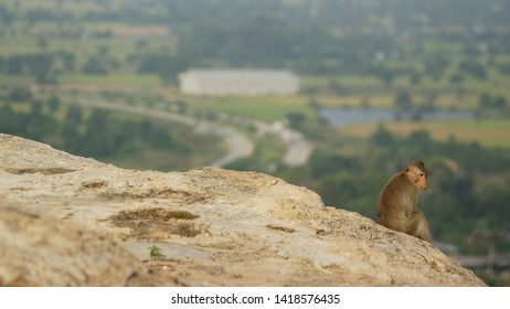 Stone floor and a monkey sitting with a natural blurred background. Alone and homesick concept.