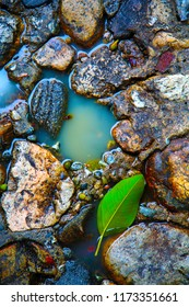 Stone Floor. Old Stone Floor with water and green tree leaf. background and textures. wet floor. wet rocks. Color enhanced.