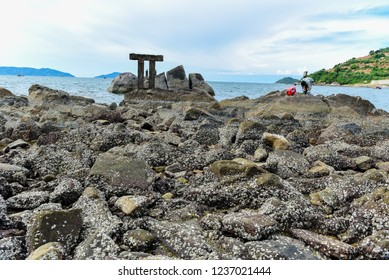 """Stone flower"" in Da Nang Beach (Vietnam), view from Son Tra hill."