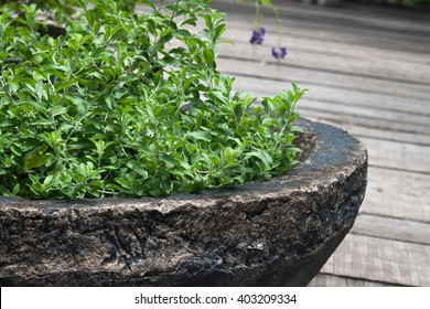 Stone garden pot with green plant