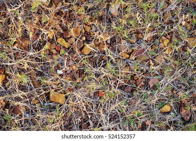 Stone and grass background