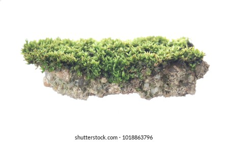Stone with green mos isolated on white background,The floating island