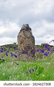 """Stone idol in the steppe. Salvia nutans. National Park """" Stone Tombs """". National Nature Sanctuary. Donetsk. Ukraine."""
