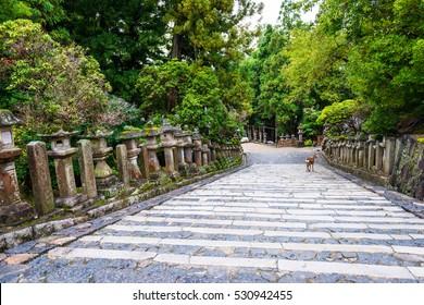 Stone lanterns in Kasuga-taisha shrine, Nara, Japan