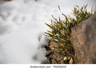 Stone with melting snow around it and green grass becoming visible