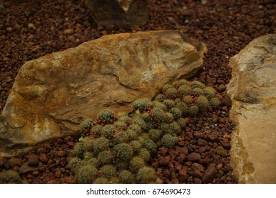 stone and mini cactus