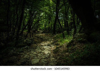 Stone path in a dense thick deep green forest near Monastery of Ostrog, Montenegro