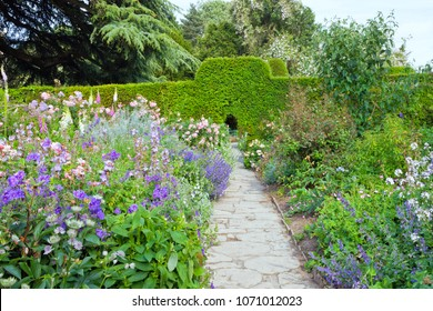 Stone path through pink, blue flowers and trimmed hedge wall in landscaped summer English garden .