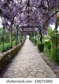 Stone pathway at the green garden of Achilleion palace of princess Sissy at Corfu island in the mediterranean sea in Greece under a pergola of purple - mauve easter lilac blooming flowers at spring